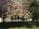 Весеннее цветение теплицких парков