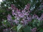 Фотографии цветов в чешских парках
