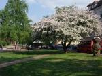 Весна в Теплице, Шановский парк
