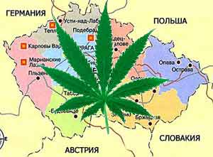 Легализация наркотиков в Чехии, конопля в Чехии, бизнес в Чехии