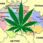 Марихуана в Чехии может стать законной
